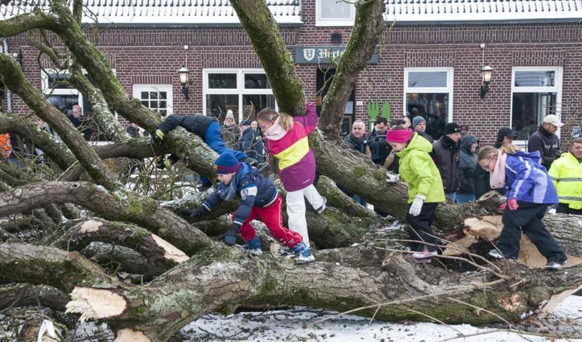 De kastanjeboom op het dorpsplein in Geijsteren is geveld. Foto: Lotte Kamphuis.