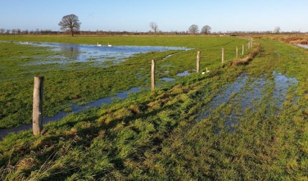 <p>Door het hoge water in de Maas beginnen ook de weilanden vol te lopen</p>