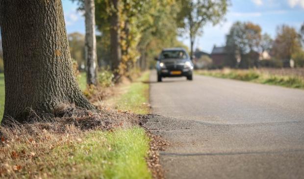 Bomen langs de Siebengewaldseweg drukken het asfalt omhoog