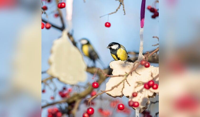 <p>Verwen ook de vogels in je tuin met een vrolijk feestmaal.</p>