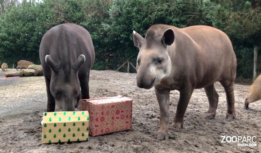 <p>Lekkers voor de dieren van ZooParc Overloon.&nbsp;</p>