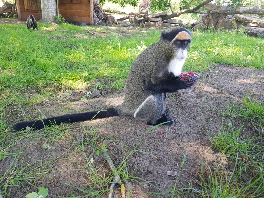 Foto: ZooParc Overloon © Peel en Maas Venray