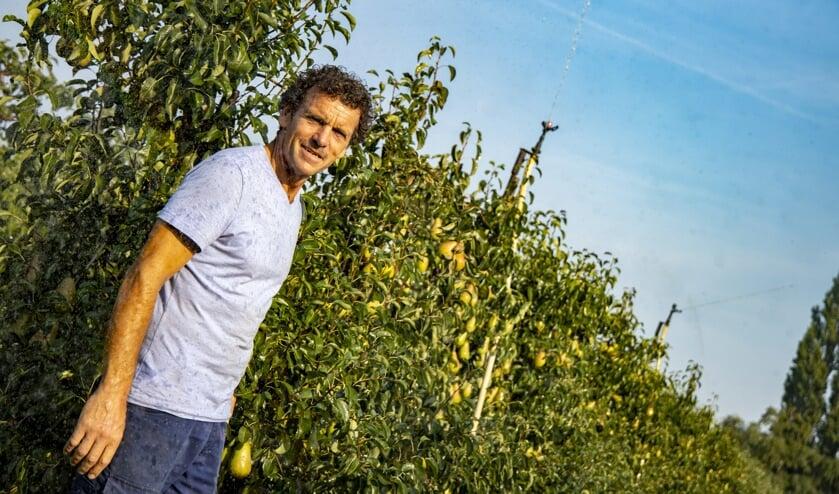 <p>Jos Drabbels tussen de perenbomen waarboven sproeiers het fruit beschermen.&nbsp;</p>