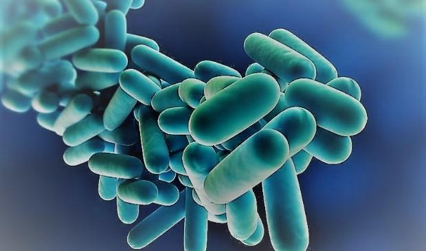 <p>Ook Legionella geconstateerd bij Pica Mare in Gennep</p>