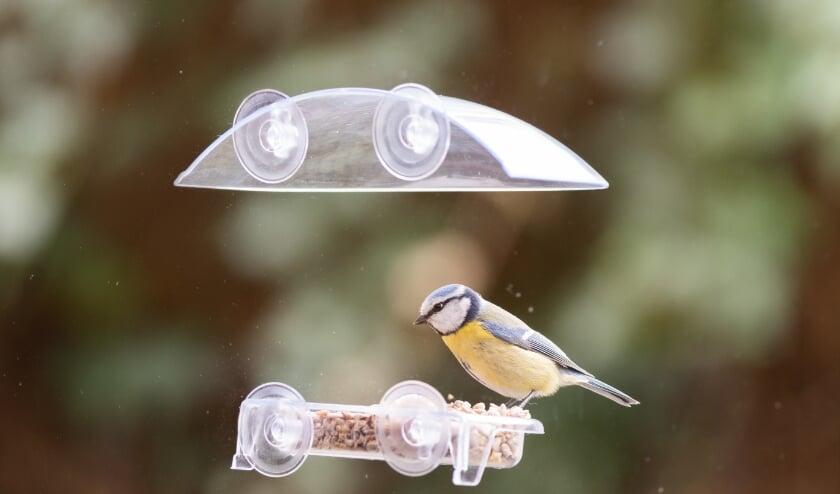 <p>Hoe meer verschillende soorten voer, hoe meer verschillende soorten vogels. </p>