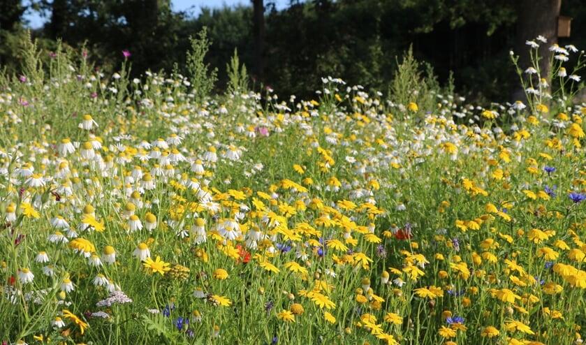 <p>Grondeigenaren worden opgeroepen &eacute;n gestimuleerd om terreinen en beeldbepalende locaties bloemrijk in te richten. </p>