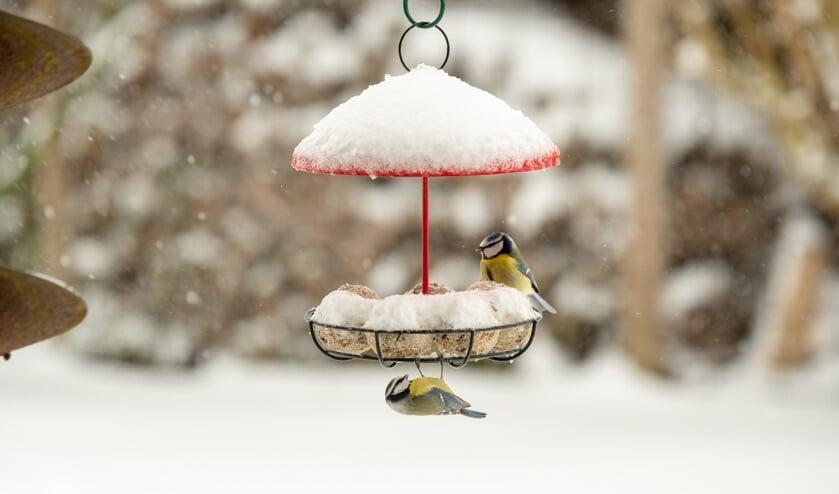 <p>Vogels zijn je dankbaar voor wat extra hulp in barre wintertijden.</p>