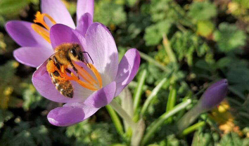 <p>Het is lente! Ook natuur kleurt uitbundig.&nbsp;</p>