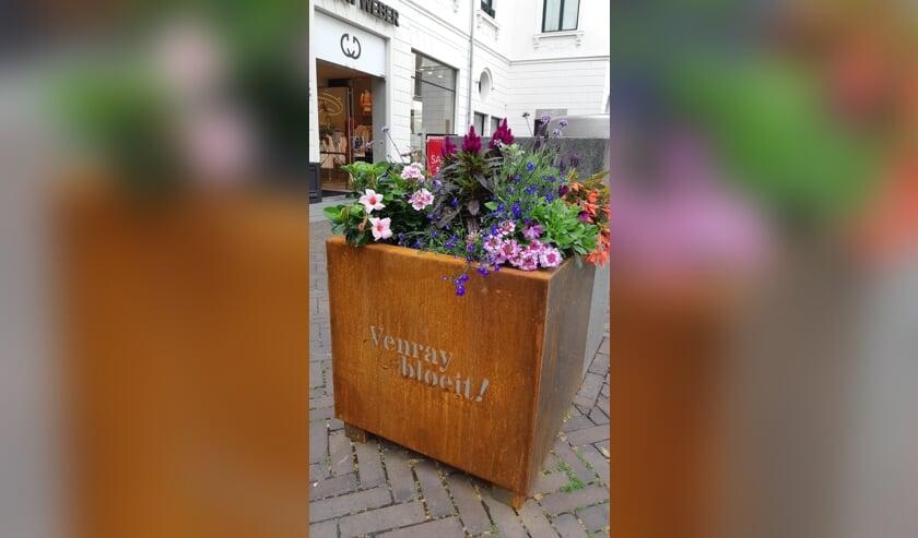<p>De plantenbakken staan er weer piekfijn bij in het Venrayse centrum.&nbsp;</p>