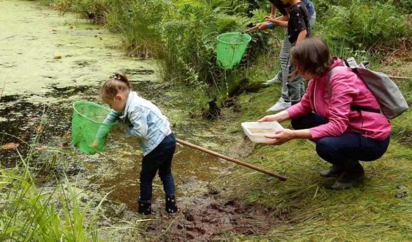<p>Slootjes zijn belangrijk voor het watermanagement en de biodiversiteit in Nederland. &nbsp;</p>