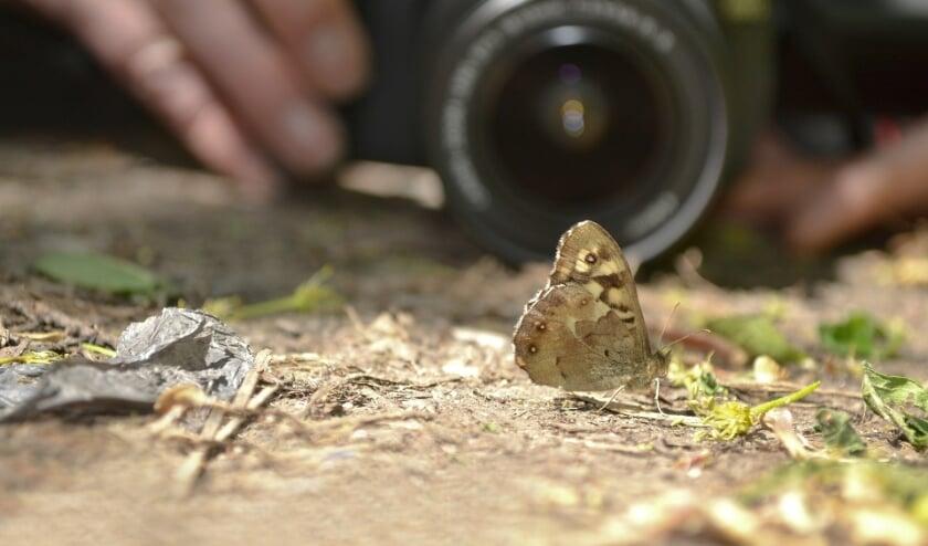 <p>IVN Geijsteren-Venray houdt op zaterdag 26 juni een workshop fotografie.</p>