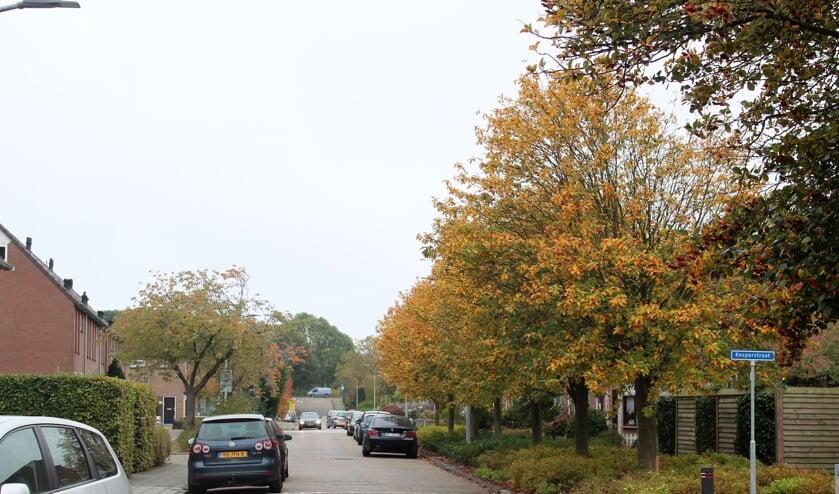 De Ruijgrockstraat, die men flink wil aanpakken.