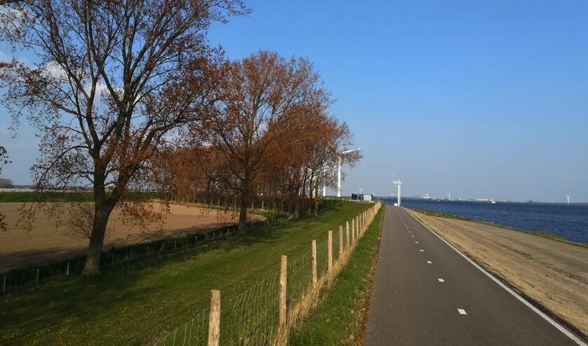 De bomen staan langs de dijk tussen de sluis bij Oude-Tonge en de Galathese haven.
