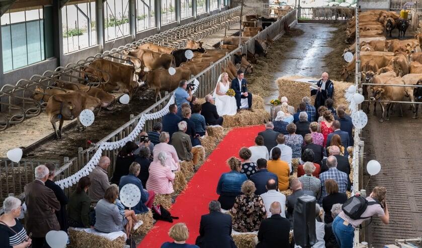 © Wim van Vossen Fotografie - GOEDEREEDE - Huwelijksceremonie in de koeienstal bij Piet Breen
