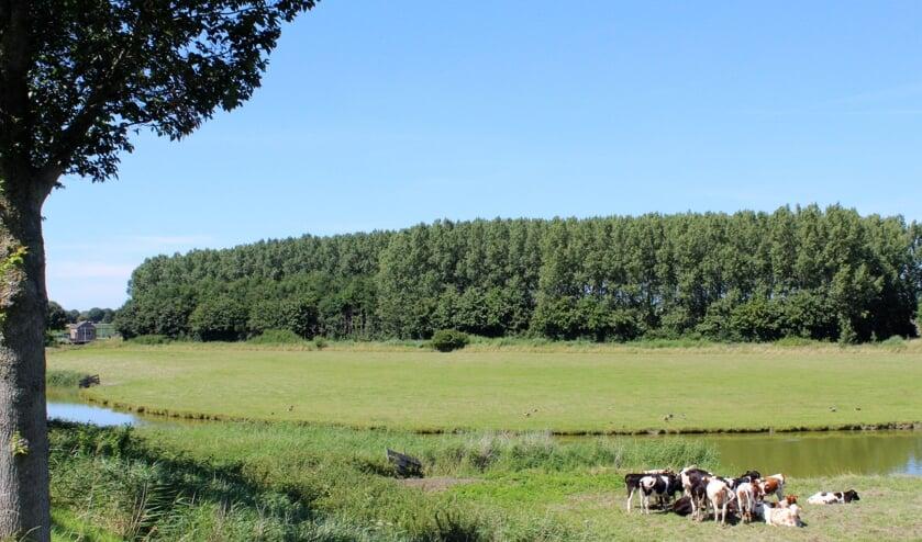 Het bos bij de Groote Kreek in Oude-Tonge (Foto: Mirjam Terhoeve).