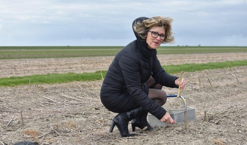 Burgemeester Grootenboer haalde traditiegetrouw de eerste asperge van het land (Foto: Gert Klok).