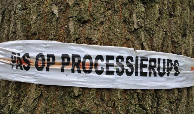 Gemeente Waterland neemt preventief milieuvriendelijke maatregelen tegen de eikenprocessierups.