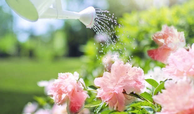 <p>Geef de planten alleen &#39;s avonds water, dan verbranden de bloemen niet overdag.</p>