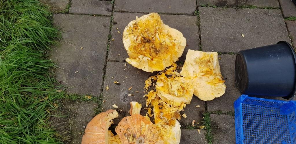 Nog meer vertrapte pompoenen.   © rodi
