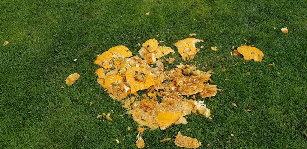 Een door de vandalen vertrapte pompoen.   © rodi