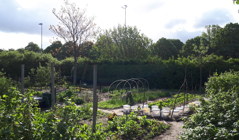 Stadstuin in park Overbos.