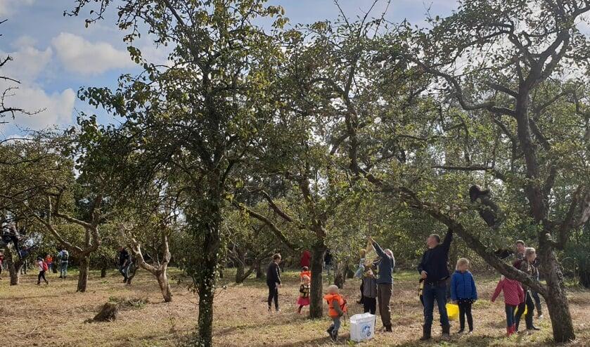Appels plukken in Eilandspolder.
