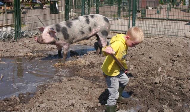 Ervaar hoe het is om als dierverzorger op de boerderij te werken.