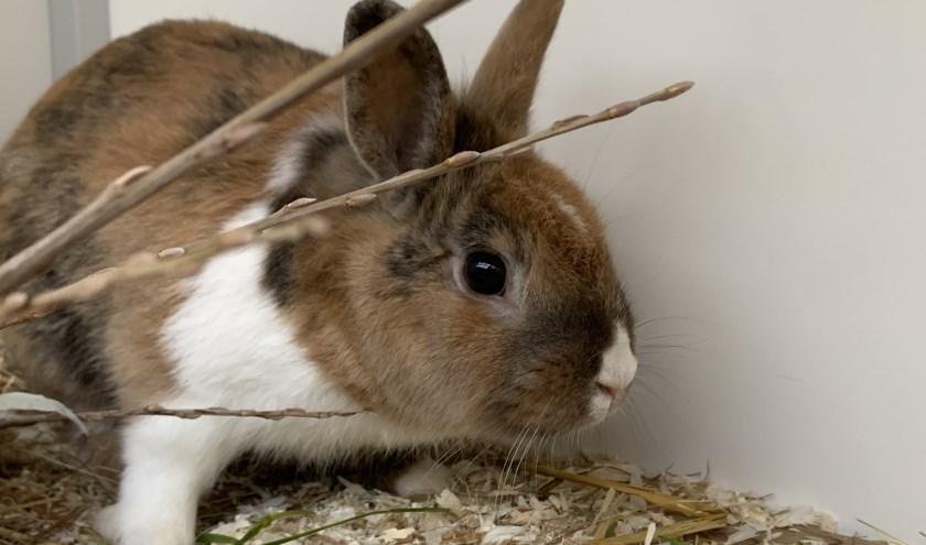 Wooper is een leuk konijntje dat op zoek is naar een fijne baas.