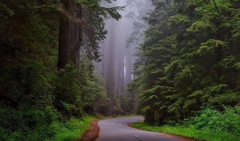 Redwood National Park is Californië.