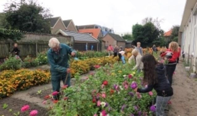 Werken in de schooltuin gebeurt al ruim 30 jaar met meester Wim (links op de foto).