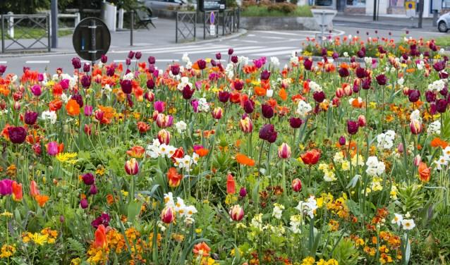 Vrolijke bloemenzee in Heerhugowaard.