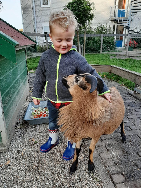 De gemeenschapstuin met kinderboerderij ligt aan de Tuinstraat/Lucasstraat. (Foto: aangeleverd) © rodi