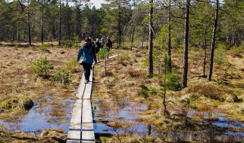 Samen wandelend de natuur in stimuleert en inspireert