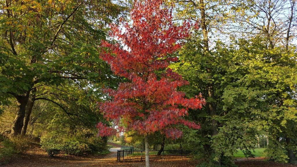 Nog meer herfst in het Haarlemmermeerse Bos.  (Foto: Mees Visser) © rodi