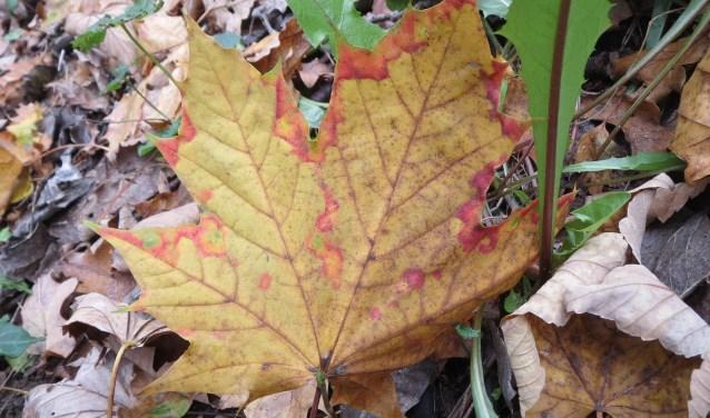De herfst maakt langzaam plaats voor de winter.