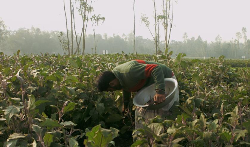 Documentaire Well Fed laat impact zien van verzet tegen genetisch modificeren van landbouwgewassen.