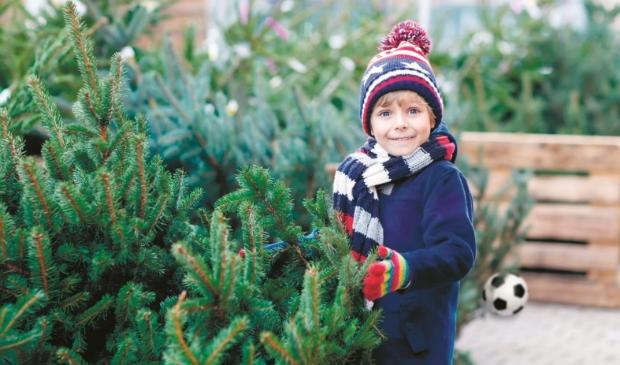 <p>Veel Haarlemmers hebben hun kerstboom al staan.</p>
