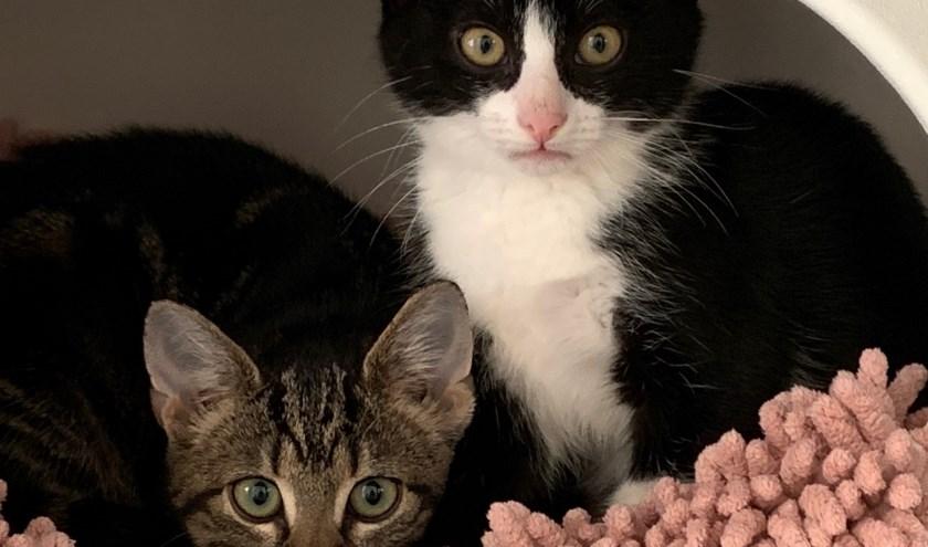 Twee van de vijf kittens inde kittenruimte.