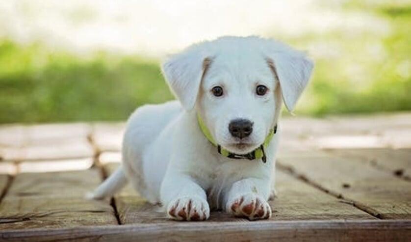 Voortaan moet overal in de gemeente hondenpoep worden opgeruimd.