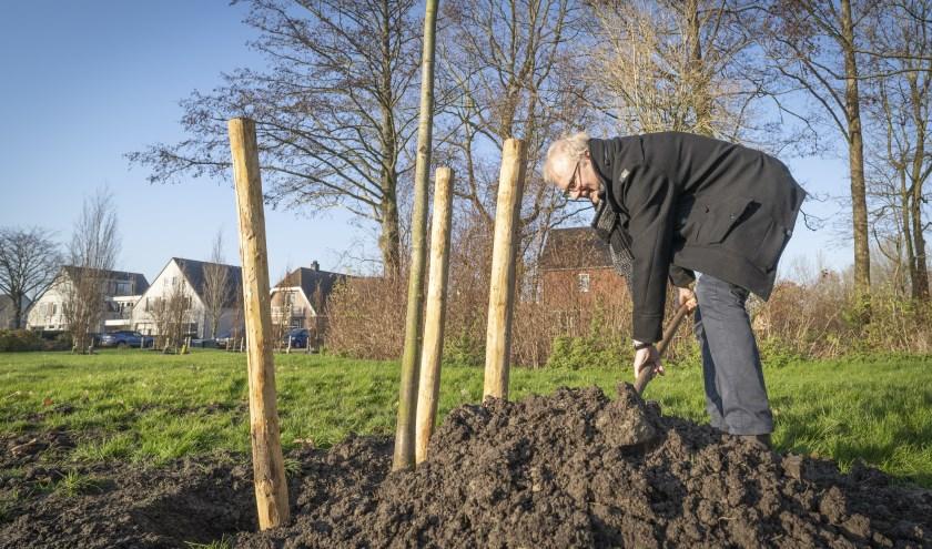 Wethouder Heddes in actie tijdens het herplanten van bomen.