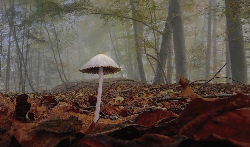 Leg de natuur, een foto van Frank Nieuwenhuizen.