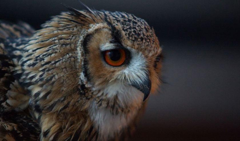 Onder deskundige begeleiding komt het publiekin contact met de uilen.