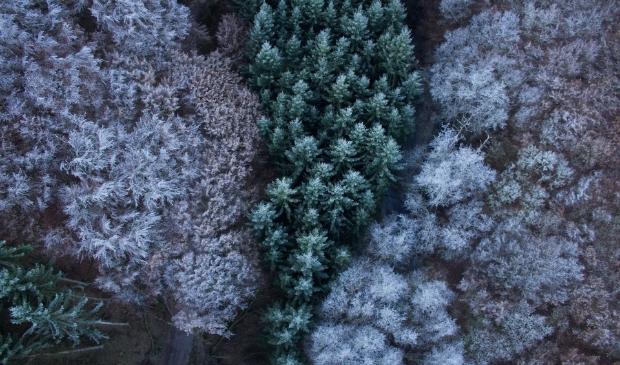 <p>Kerstbomen inleveren Edam-Volendam</p>