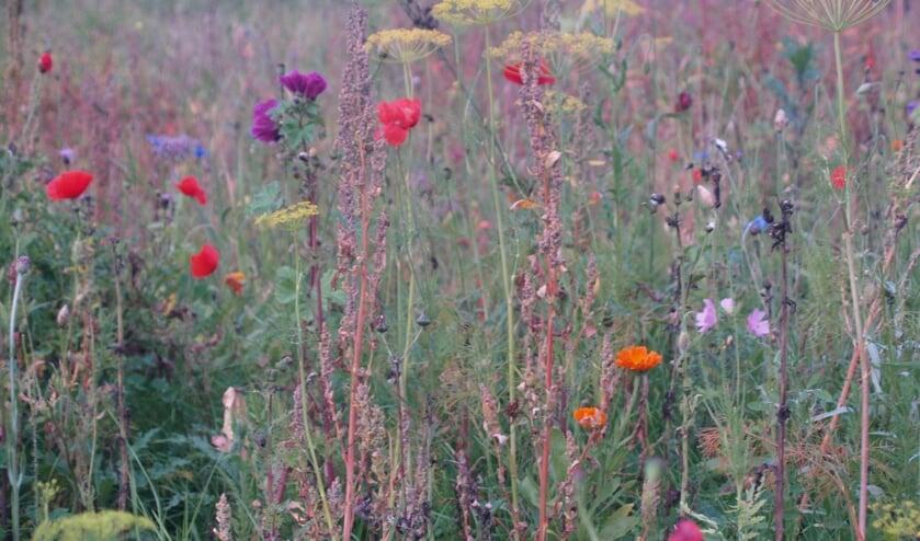Een levende tuin is een tuin die in elk seizoen barst van de levende planten en dieren.