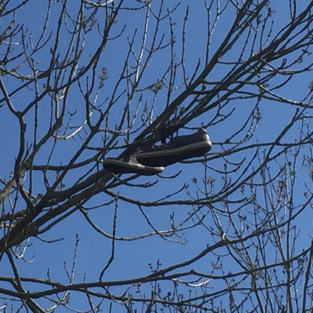 En nog meer schoenenkunst in een boom in Getsewoud.  (Foto: Anke Steffers) © rodi