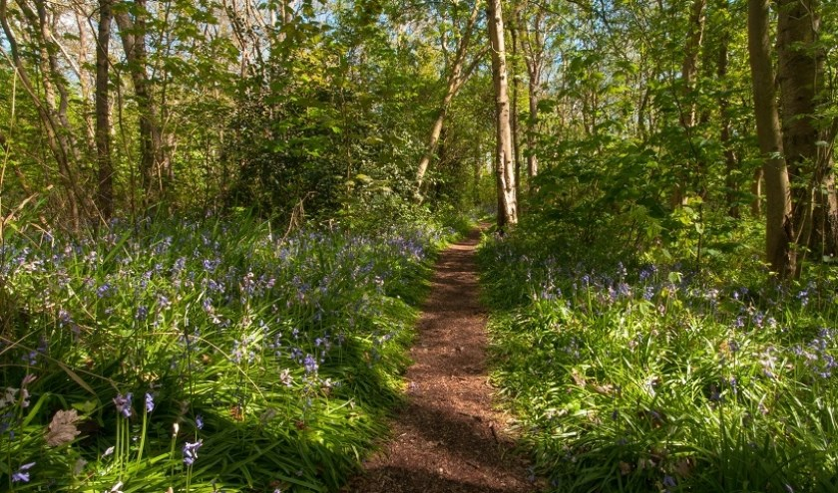 Hyacintenbos in Wildrijk.