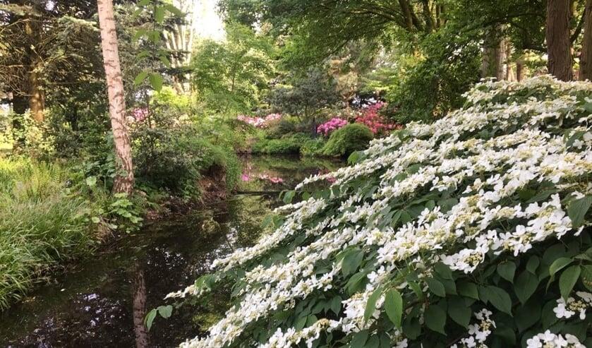 Kom gezellig kijken bij de open tuinendagen.