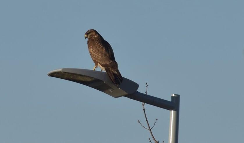Door heel vroeg te vertrekken, zijn volop vogels te horen en te zien.