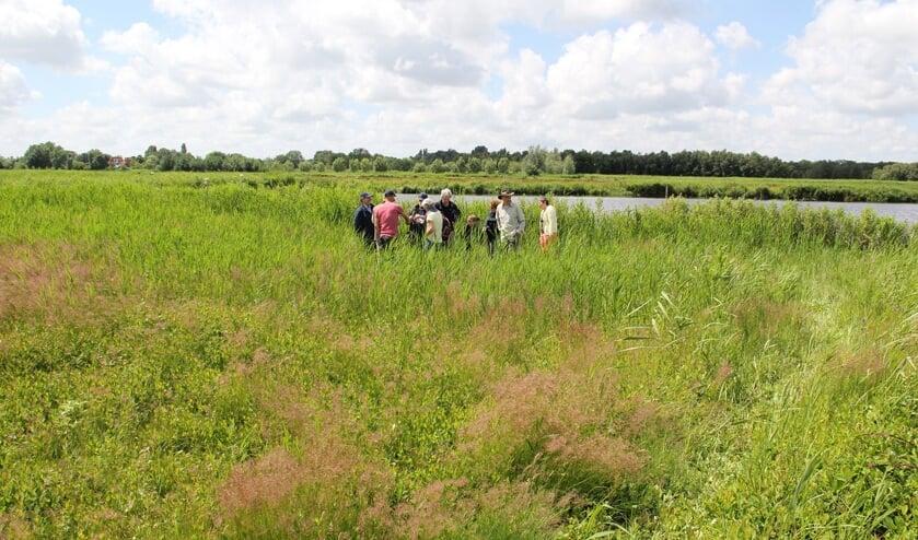 Op zoek naar eetbare planten in Ilperveld