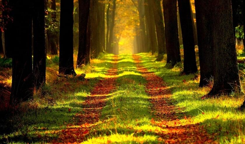 Wandelen door de natuur.